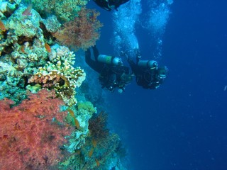 Divers on the reef