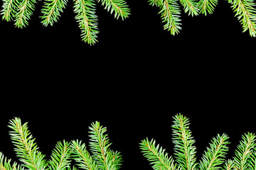 green fir branches with space for your text  on dark background