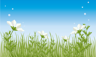 vector image of summer grass