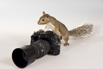 The squirrel -  photographer