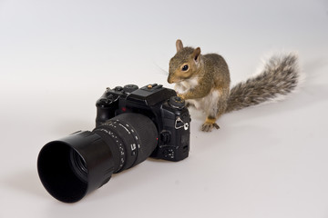 The squirre and the camera