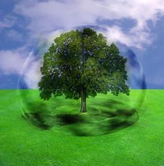 arbre dans une bulle
