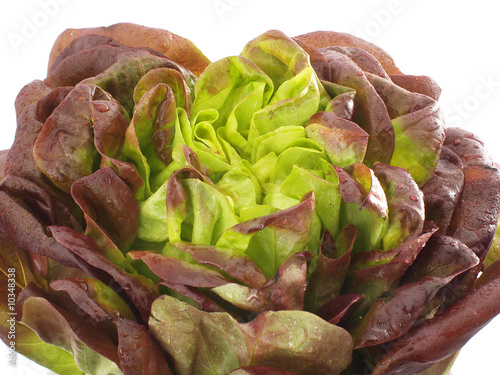 salat lollo rosso stockfotos und lizenzfreie bilder auf bild 10348338. Black Bedroom Furniture Sets. Home Design Ideas