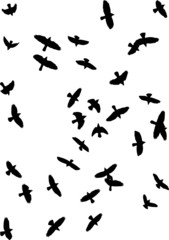 vector silhouette of crows  flying