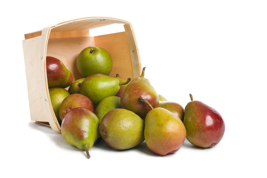 Fresh Seckel Pears spilling from a wood pint box