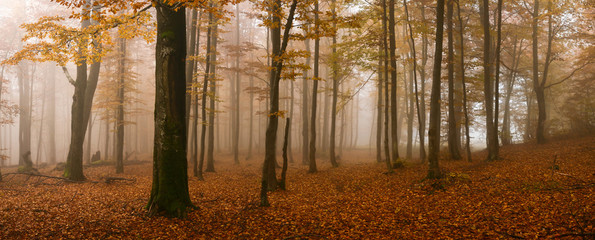 An image of a golden trees in a misty forest