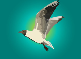 gull and blue sky illustration