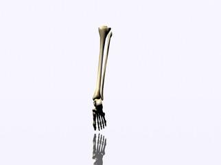 Human skeleton part
