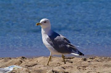 Seagul on the sunny beach
