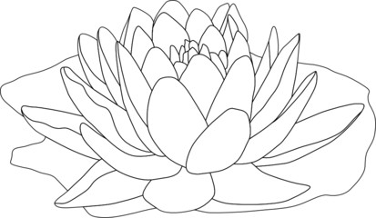 vector - contour waterlilly isolated on white background