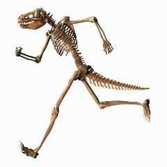 Skelett 081113 1