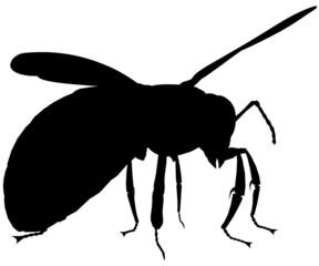 Bee101
