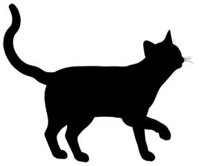 cat107