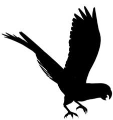 Macaw104