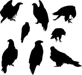 Poster Uilen cartoon eight eagle silhouettes