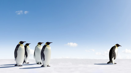 Photo sur Toile Pingouin Emperor Penguin rejected by other Penguins