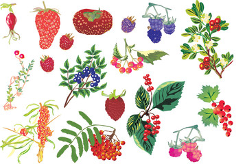 Sweet berry set