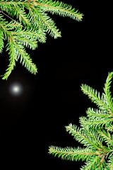 Border from branches.green fir branches