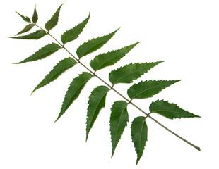 feuille de neem