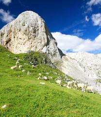 The Sheeps in Julian Alps