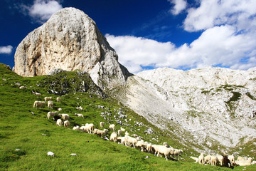 The Sheeps in Julian Alps