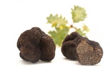 Truffes et chêne blanc