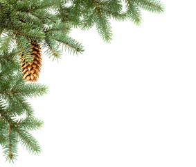 corner, branch of fir with cone