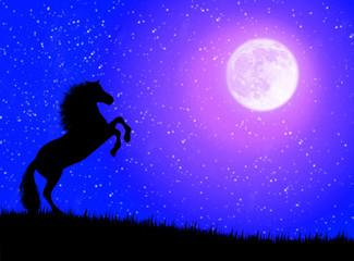 Cavallo nella notte