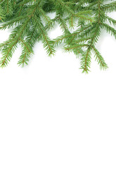 Background with green fresh branches of a fur-tree.