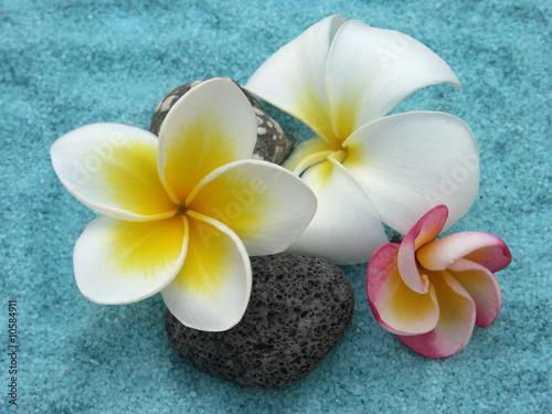 trois vari t s diff rentes de fleurs de frangipaniers photo libre de droits sur la banque d. Black Bedroom Furniture Sets. Home Design Ideas