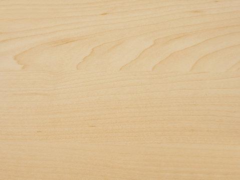 Detail of maple tree wood