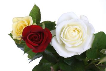 Rose elements.