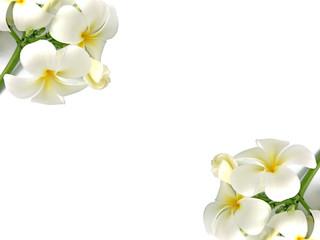 cadre avec deux bouquets de frangipaniers