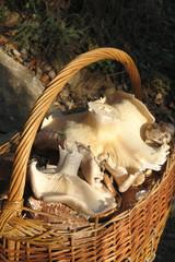 mooshrooms in basket