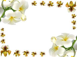 orchidées et frangipaniers en bordure de page