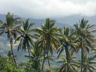 cocotiers sur fond de montagnes, île de la Réunion