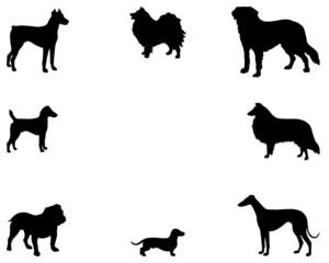 Hintergrund mit Hunden