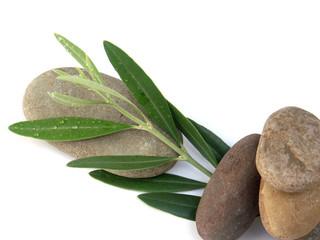 des galets et un rameau d'olivier