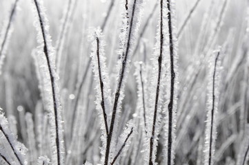 sparkling frost
