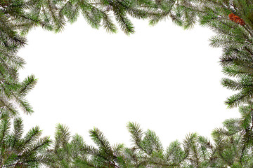 Christmas Tree Branches Bordering Copy Space