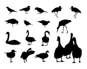 silhouettes of birds -vector