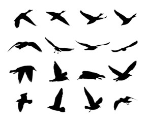silhouettes of flying birds -vector