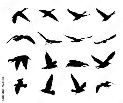 silhouettes of flying birds vector stock image and royalty free rh fotolia com free bird vector graphics free hummingbird vector