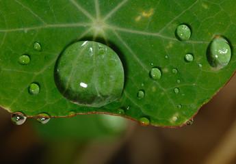Lotus effect, Lotuseffekt