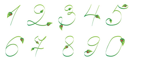 Handwrited text with leaves and ladybug. Numbers from 0 to 9