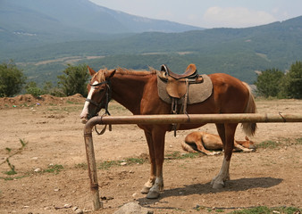 Photo of horse in a farm