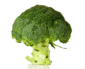 Green head of broccoli on white background