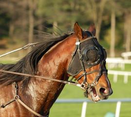 cheval trotteur