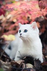autumn & kitten