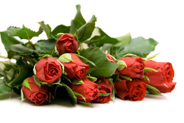 red roses isolated on white with space for text